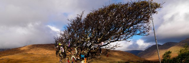 Fairy Tree in Killary Harbour