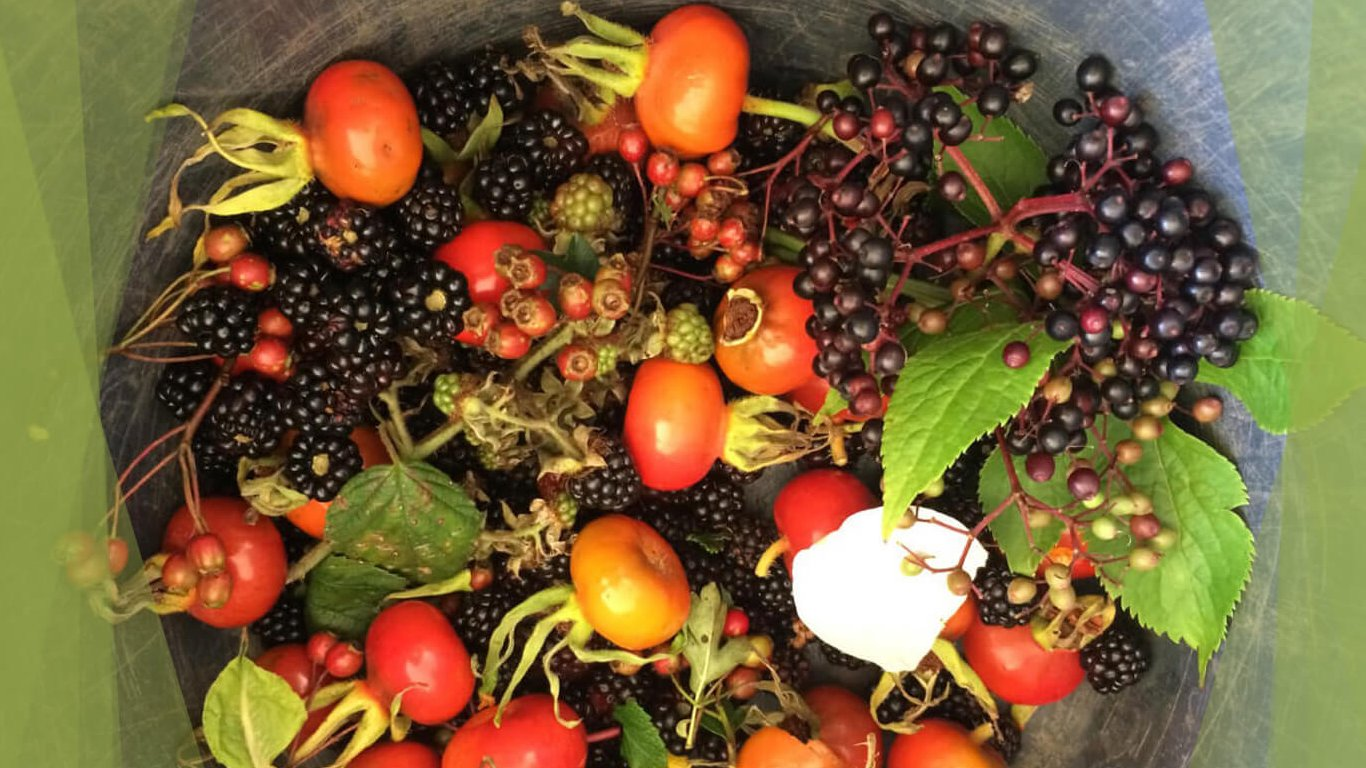 Selection of berries and other fruit foraged in Ireland