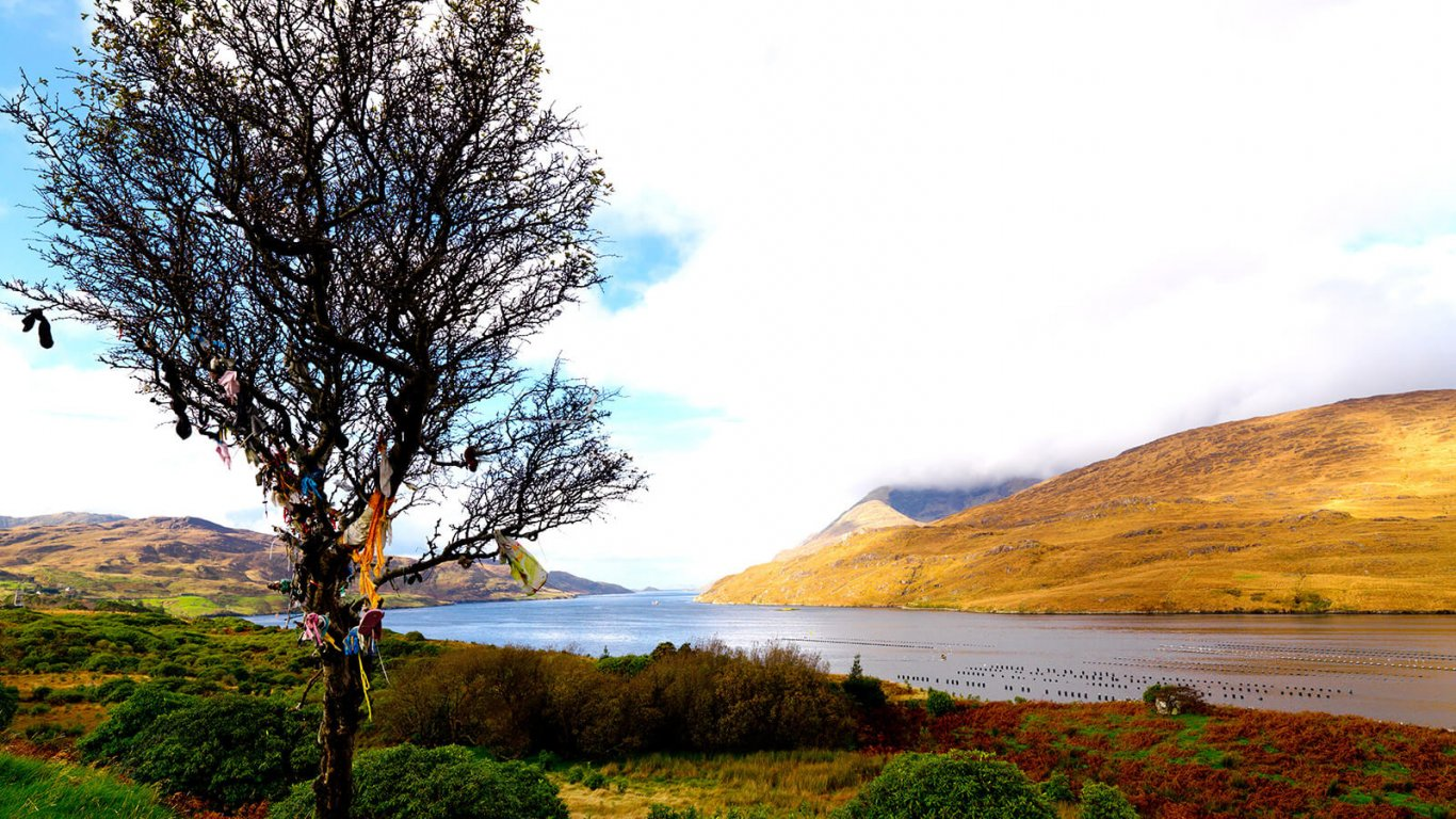 Fairy tree in Killary harbour, Connemara