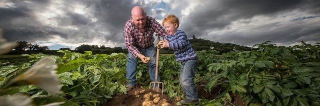Man and boy digging potatoes in Ireland