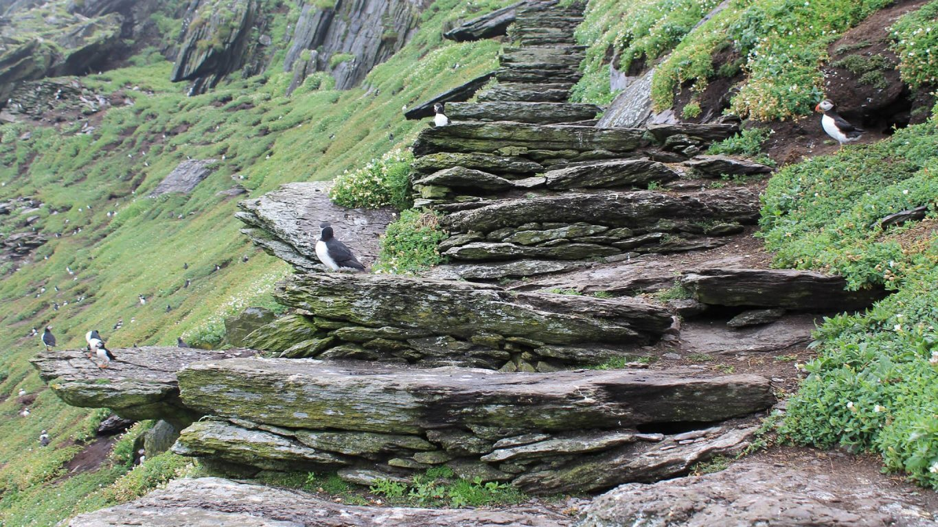 Puffins sitting on the steps leading up to the summit of Skellig Michael