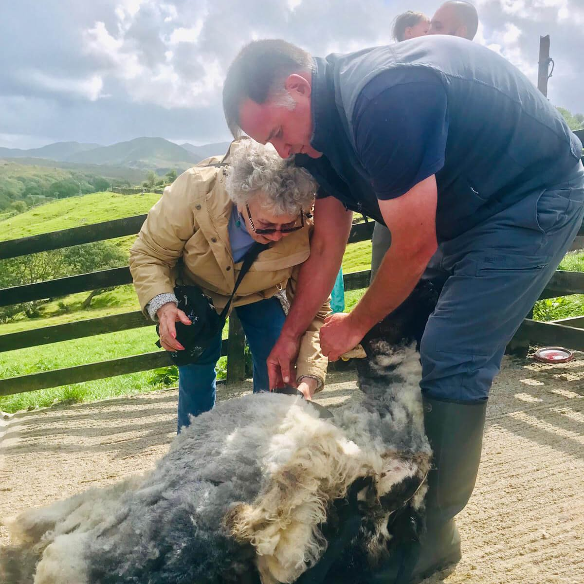 Sheep farmer with tour guest during summer in Ireland