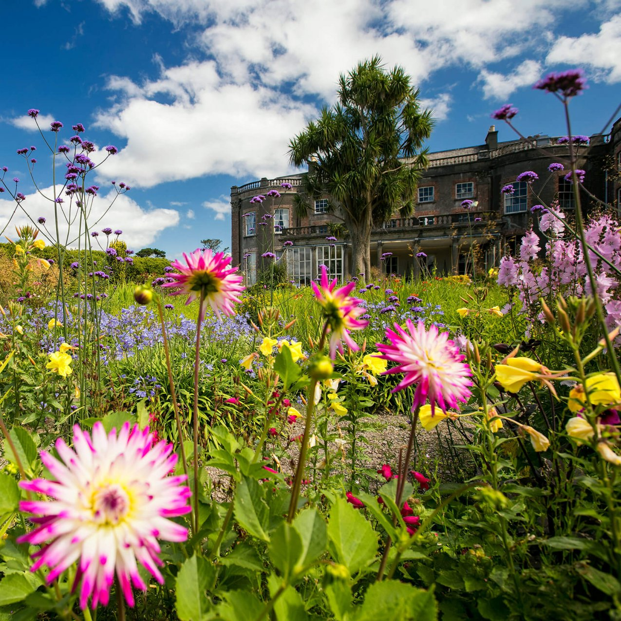 Colourful flowers in the gardens of Bantry House in Ireland