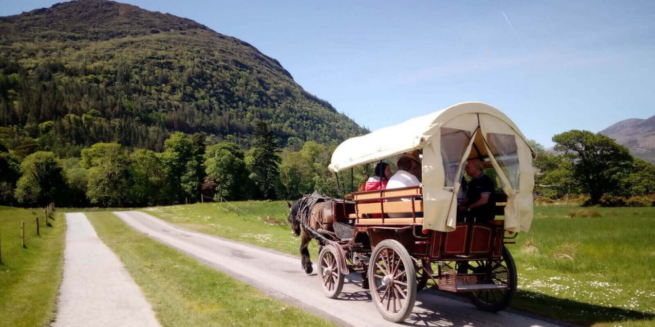 A horse-drawn jaunting carriage carries Driftwood Tour guests through sunny and scenic Killarney National Park in Kerry, Ireland