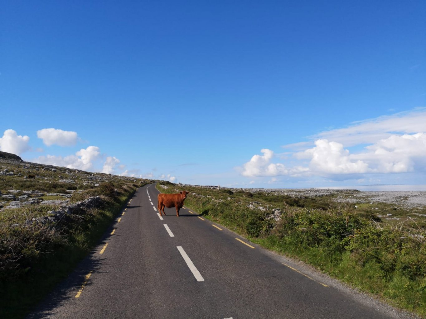 A cow in the middle of a country road
