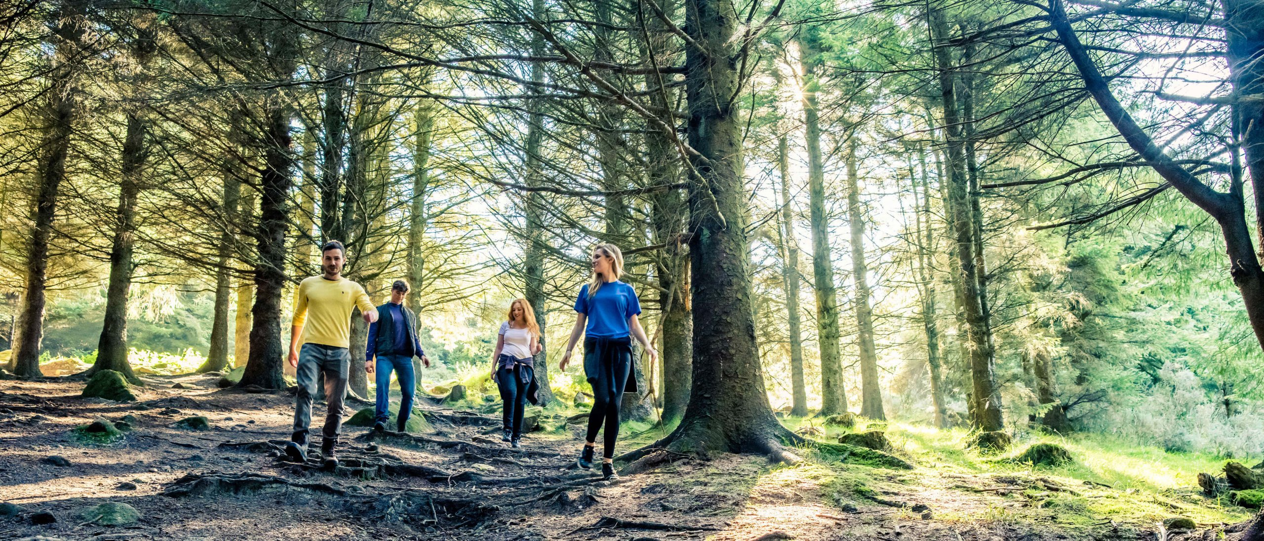 Group hiking in a forest in Ireland