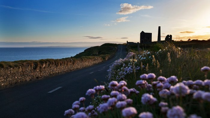 Road along Copper Coast at sunset with flowers in foreground and ruins in the background