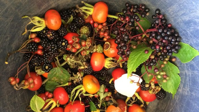A collection of wild foods delights including berries and rosehips foraged  from hedgerows in Ireland