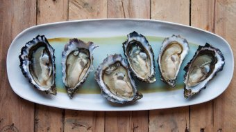 Six fresh oysters on the half shell lie opened on a rectangular plate with wooden background