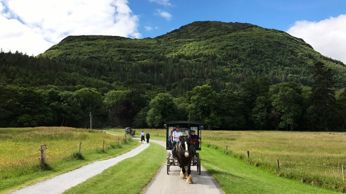 A group of guests jaunting in Killarney National Park