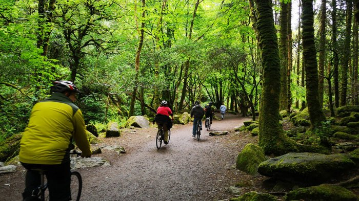 Vagabond guests cycling through ancient woodlands in Killarney National Park