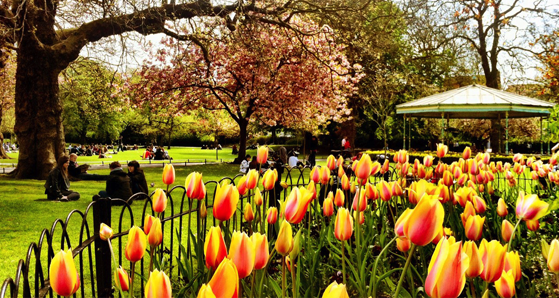St Stephen's Green, spring in ireland
