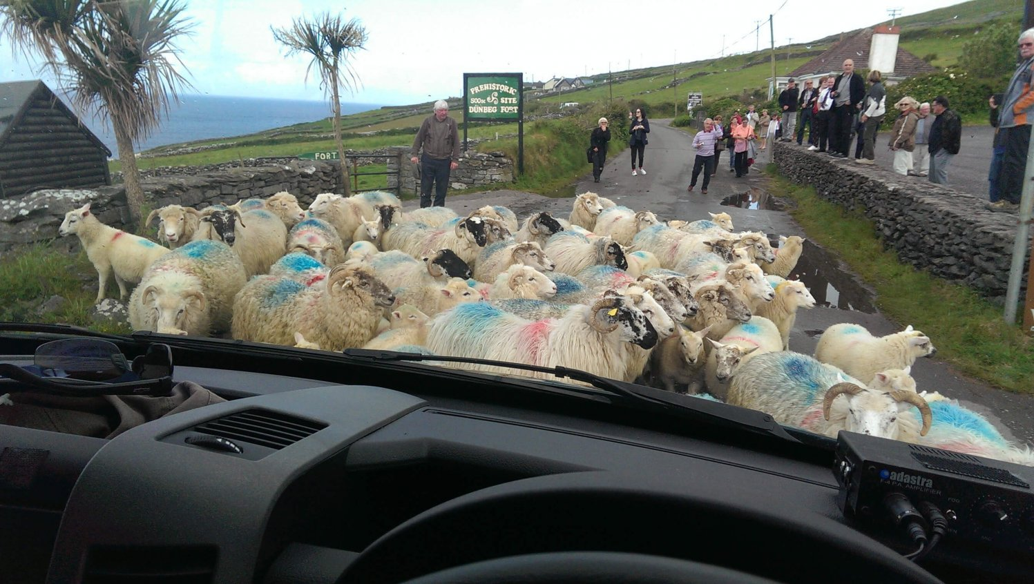 View out over the dashboard of a Vagabond tour vehicle as a group of sheep block a rural road somewhere in Ireland