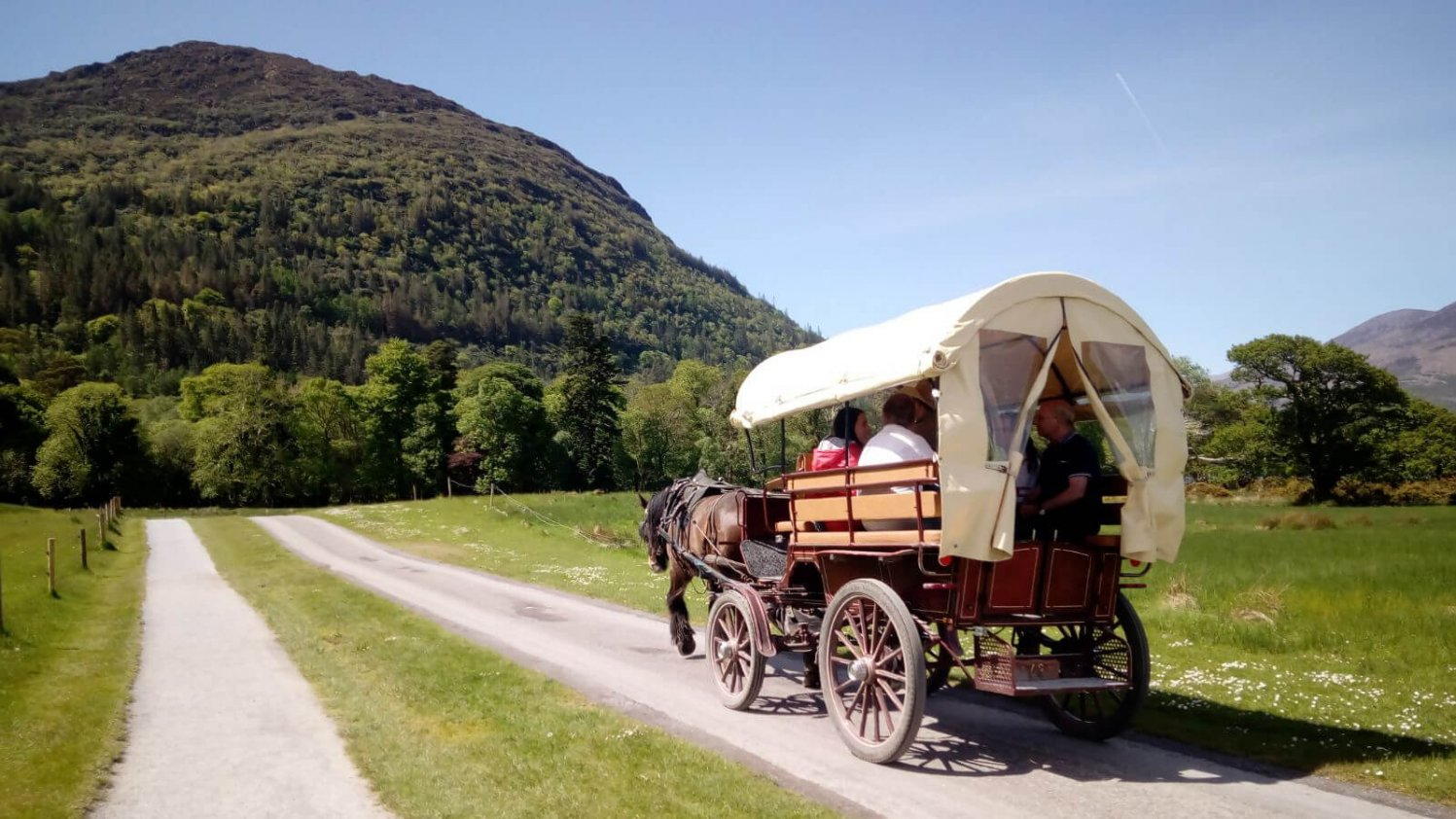 A horse-drawn jaunting carriage moves through the scenery of Killarney National Park