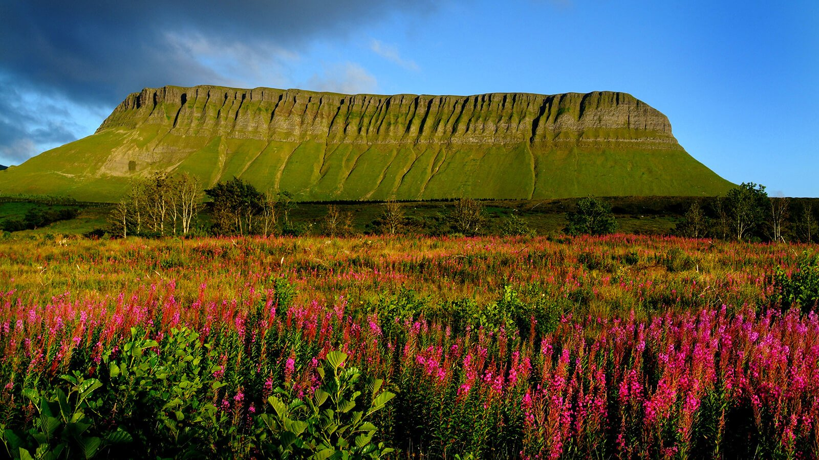 Ben Bulben Mountain with wildflowers in the foreground in Sligo, Ireland