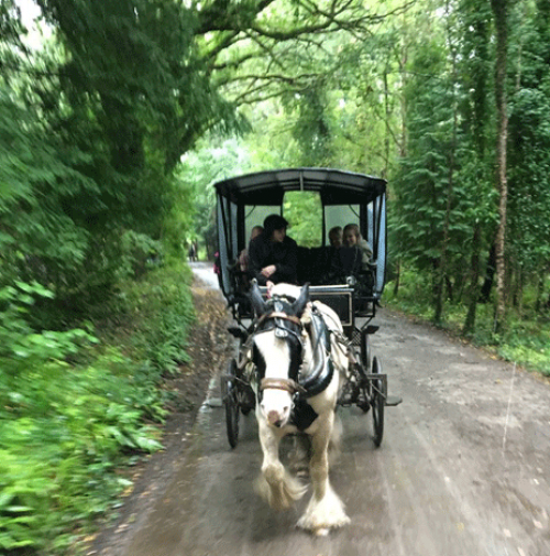 Killarney National Park jaunting car