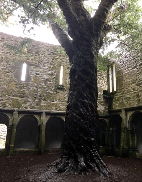 This tree represents a highlight for me on the tour—I had just wandered through the ruins of Muckross Abbey in Killarney National Part and discovered this 600 year-old ancient yew, still thriving in the cloistered courtyard, centuries after the place had gone into ruin. It was dripping with rain and almost seemed as though it were crying. I later bought myself a silver yew necklace to commemorate this special moment on the tour.
