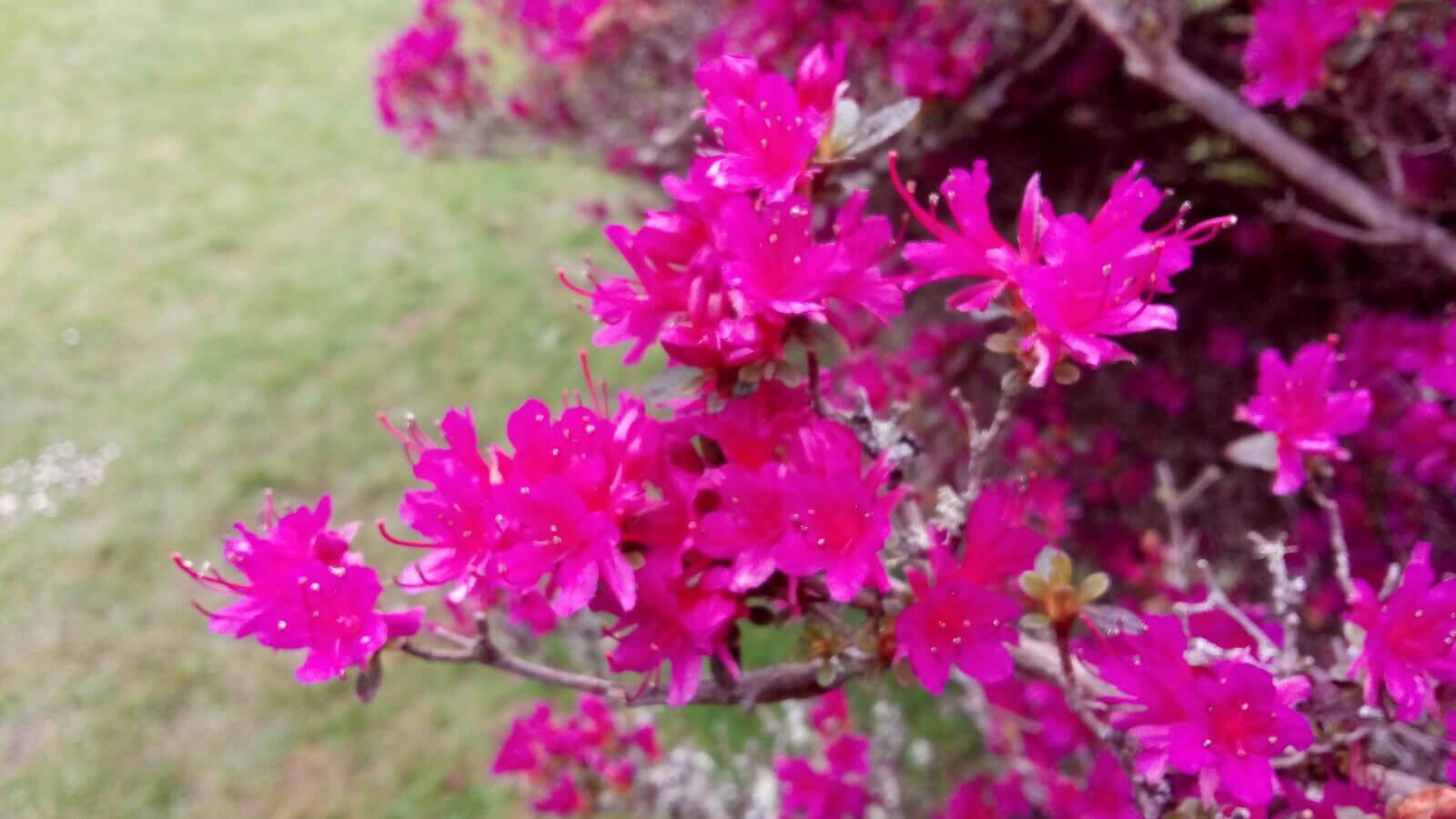 Pink Irish wildflowers